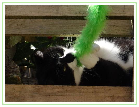 Kattenoppasamsterdam